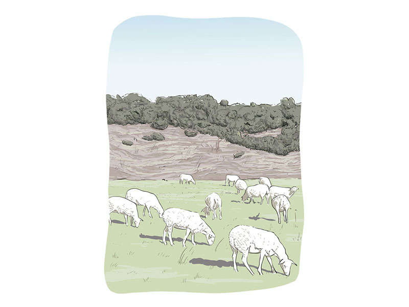 illustration pastorale