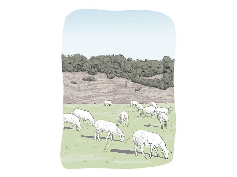 illustration pastorale